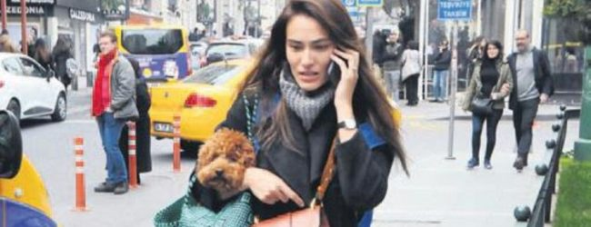Aksoy'un köpeği çantasında